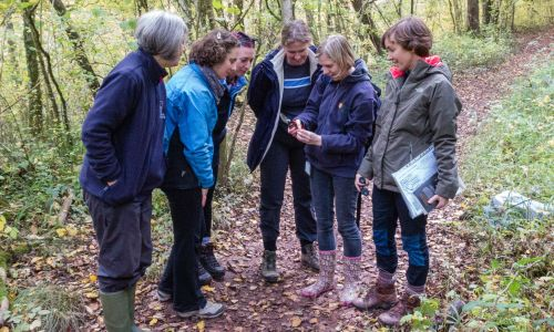 Staff from Kew's Millennium Seed Bank join forces with volunteers from Brecknock Wildlife Trust to collect dogwood seeds