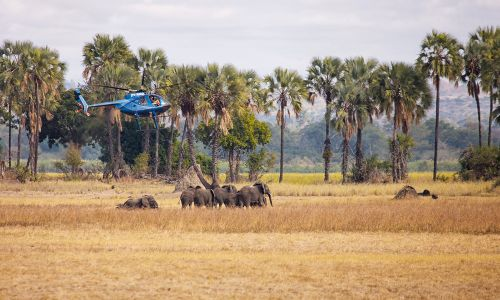 Last year, African Parks began the mammoth task of relocating 500 elephants to a new conservation area in Malawi - Photo credit African Parks/Frank Weitzer