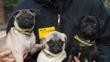 A trio of canine chums feel the benefits of having a new Dogs Trust Canine Carer