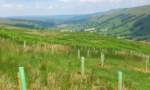 Yorkshire Dales Millennium Trust has planted thousands of new trees in Yorkshire