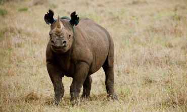 By supporting WWF, players are helping to protect rhino