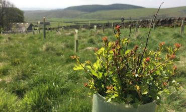 Yorkshire Dales Millennium Trust works to protect nature in the Yorkshire Dales