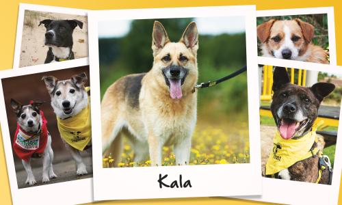 Kala is just one of the dogs who have found a new, happy home thanks to Dogs Trust