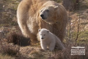 Mum Victoria and her new cub explore outside