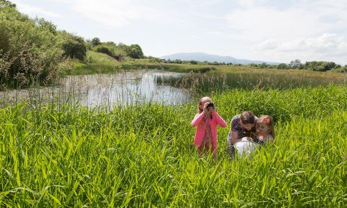 WWT works to protect, create and restore wetlands for the benefit of people and wildlife