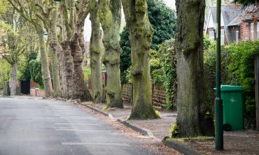 The Woodland Trust hopes to raise awareness of the cultural and environmental importance of street trees (Photo Credit: Phil Formby/WTML)