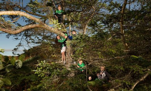 Voting for Woodland Trust's Tree of the Year competition is open until 9am on 8th October