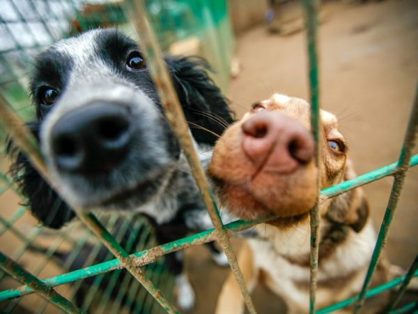 How To Get Involved With Animal Rescue
