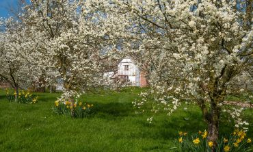 One of the National Trust designs will recreate an orchard from the 19th century
