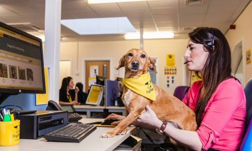 The Dogs Trust Post Adoption Support team has made almost 8,500 outbound calls to 2,028 new adopters